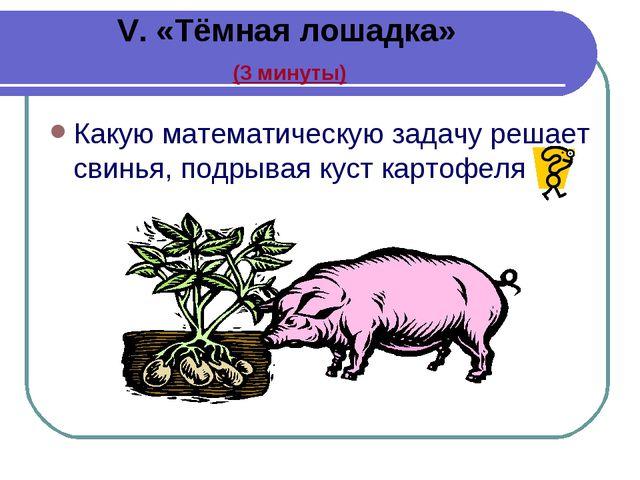 V. «Тёмная лошадка» (3 минуты) Какую математическую задачу решает свинья, по...