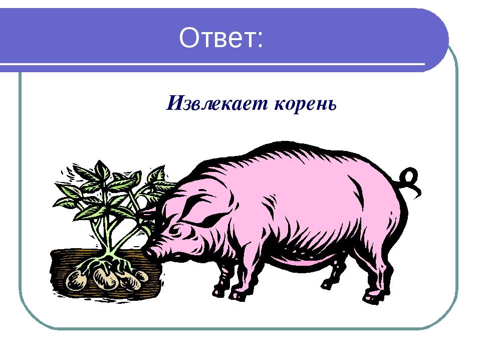 Ответ: Извлекает корень