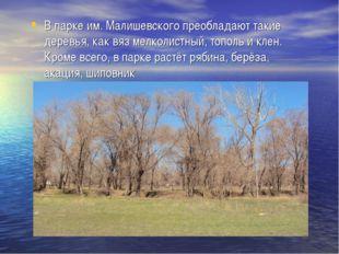 В парке им. Малишевского преобладают такие деревья, как вяз мелколистный, топ