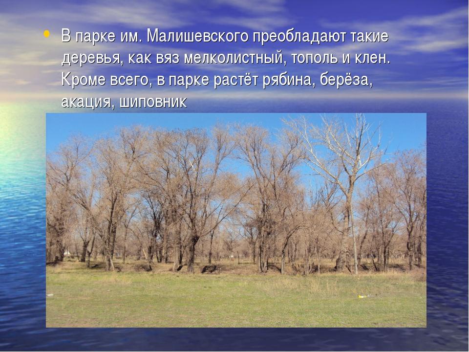 В парке им. Малишевского преобладают такие деревья, как вяз мелколистный, топ...