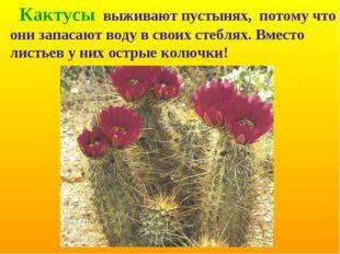 Кактусы выживают пустынях, потому что они запасают воду в своих стеблях. Вме
