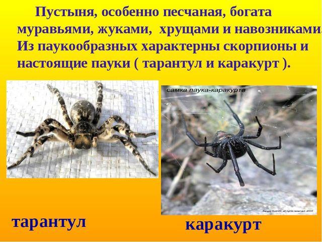 Пустыня, особенно песчаная, богата муравьями, жуками, хрущами и навозниками....