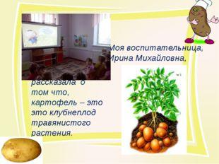 Моя воспитательница, Ирина Михайловна, рассказала о том что, картофель – это