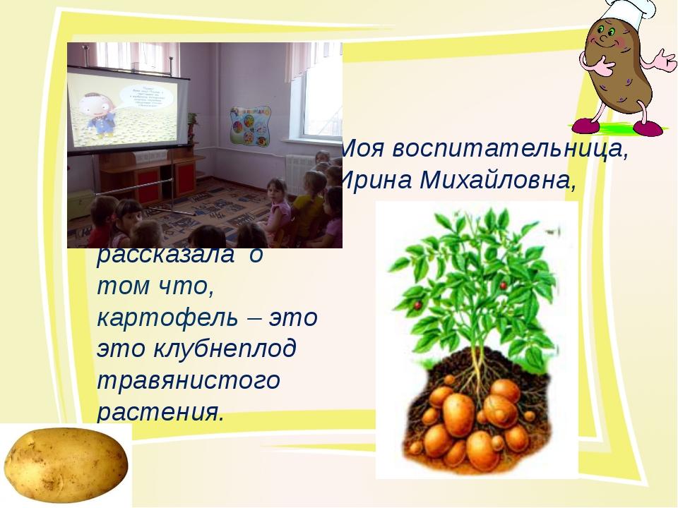 Моя воспитательница, Ирина Михайловна, рассказала о том что, картофель – это...