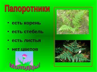 есть корень есть стебель есть листья нет цветов