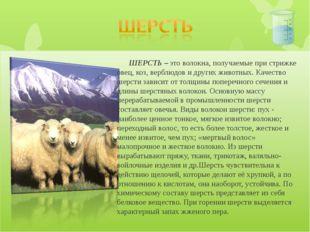 ШЕРСТЬ – это волокна, получаемые при стрижке овец, коз, верблюдов и других ж