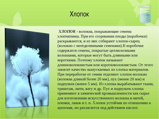Хлопок ХЛОПОК - волокна, покрывающие семена хлопчатника. При его созревании...
