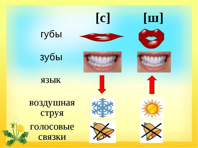 [с][ш] губы  зубы  язык  воздушная струя голосовые связки