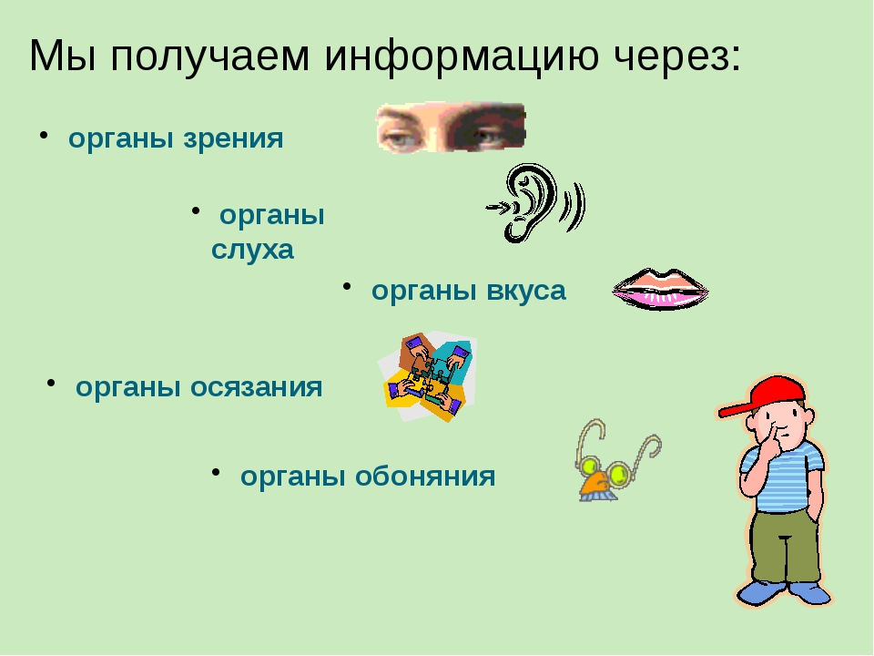 Мы получаем информацию через: органы зрения органы слуха органы вкуса органы...