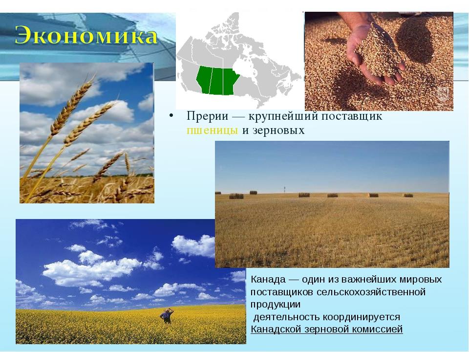 Прерии— крупнейший поставщик пшеницы и зерновых Канада— один из важнейших м...