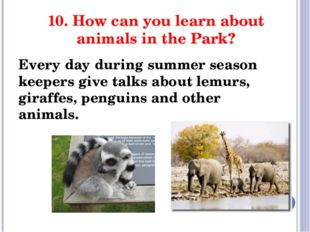 10. How can you learn about animals in the Park? Every day during summer seas