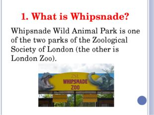 1. What is Whipsnade? Whipsnade Wild Animal Park is one of the two parks of t