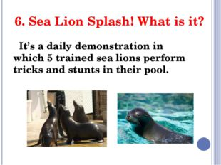6. Sea Lion Splash! What is it? It's a daily demonstration in which 5 trained