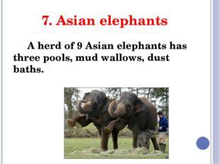 7. Asian elephants A herd of 9 Asian elephants has three pools, mud wallows,