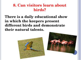 8. Can visitors learn about birds? There is a daily educational show in which