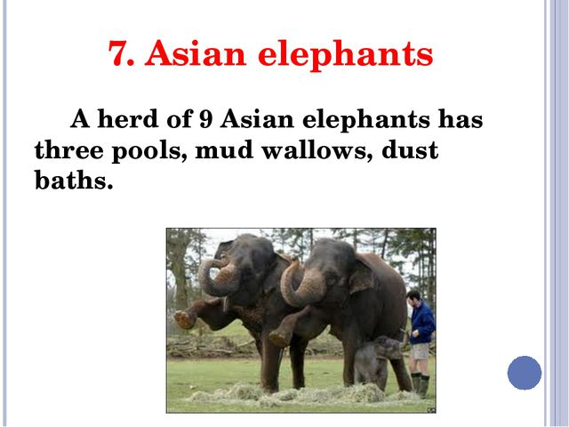 7. Asian elephants A herd of 9 Asian elephants has three pools, mud wallows,...