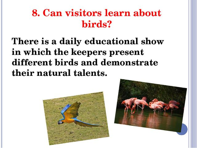 8. Can visitors learn about birds? There is a daily educational show in which...