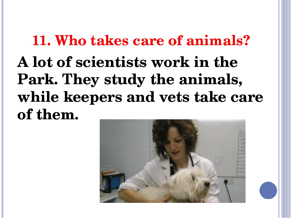 11. Who takes care of animals? A lot of scientists work in the Park. They stu...