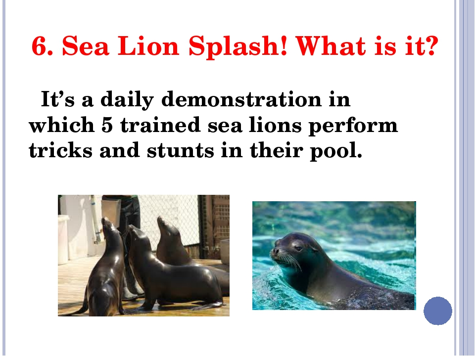 6. Sea Lion Splash! What is it? It's a daily demonstration in which 5 trained...