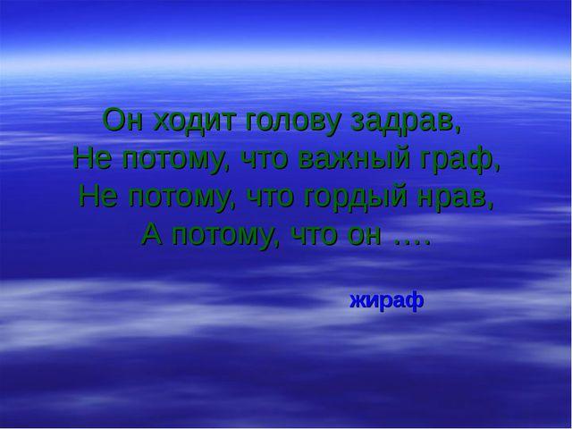 Он ходит голову задрав, Не потому, что важный граф, Не потому, что гордый нра...