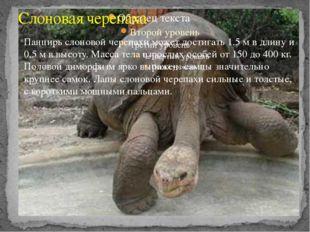 Слоновая черепаха Панцирь слоновой черепахи может достигать 1,5 м в длину и 0