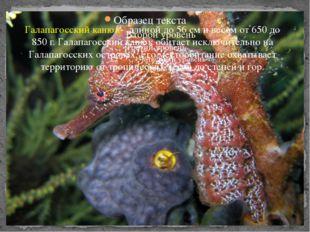 Галапагосских канюкггг Галапагосский канюк- длиной до 56 см и весом от 650 до