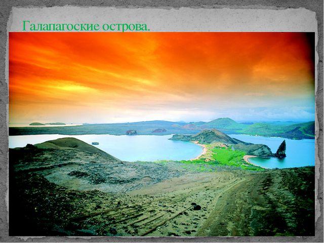 Галапагоские острова.
