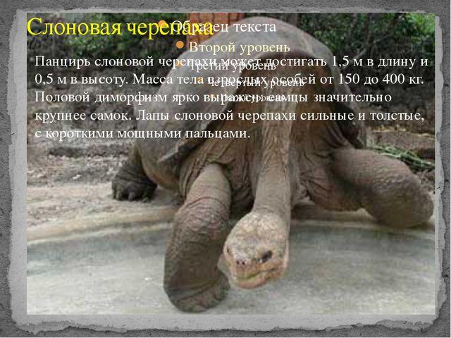 Слоновая черепаха Панцирь слоновой черепахи может достигать 1,5 м в длину и 0...