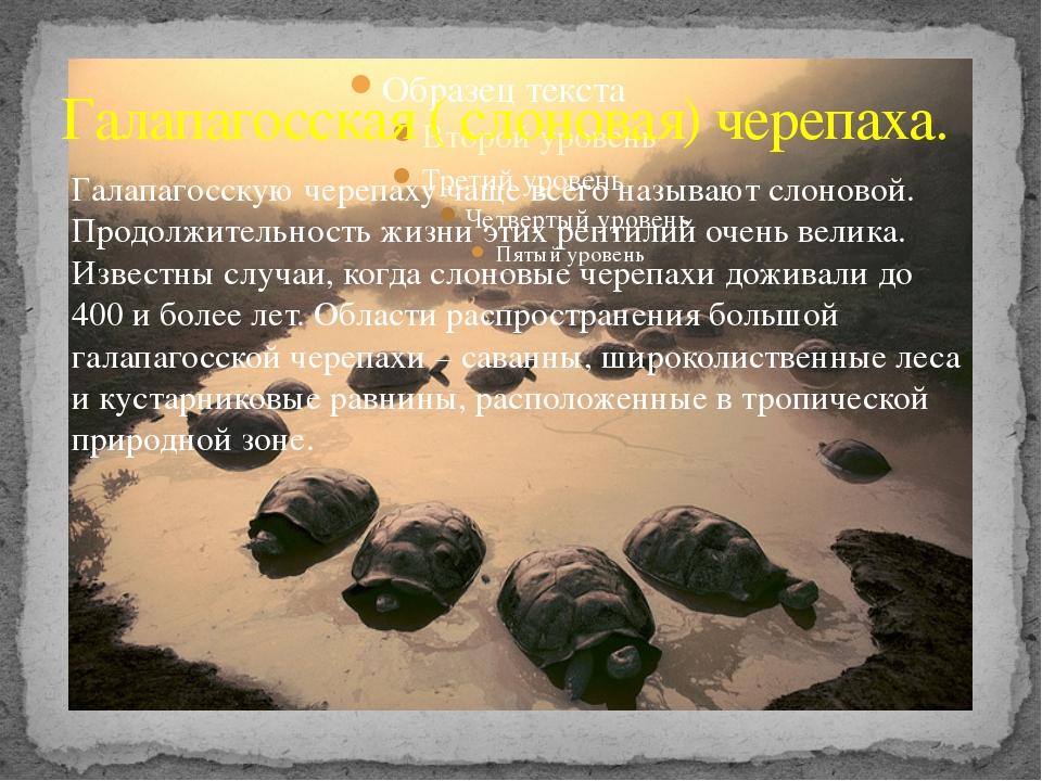 Галапагосская ( слоновая) черепаха. Галапагосскую черепаху чаще всего называю...