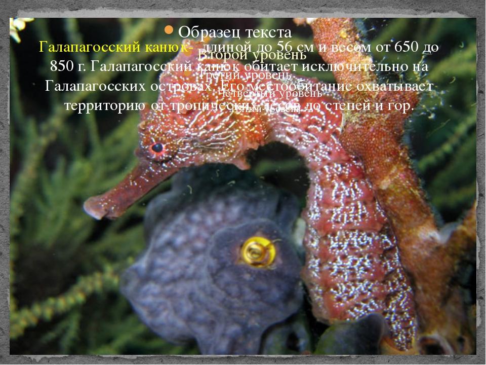 Галапагосских канюкггг Галапагосский канюк- длиной до 56 см и весом от 650 до...