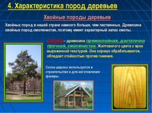 Хвойные породы деревьев Хвойных пород в нашей стране намного больше, чем лист
