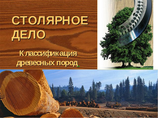 СТОЛЯРНОЕ ДЕЛО Классификация древесных пород