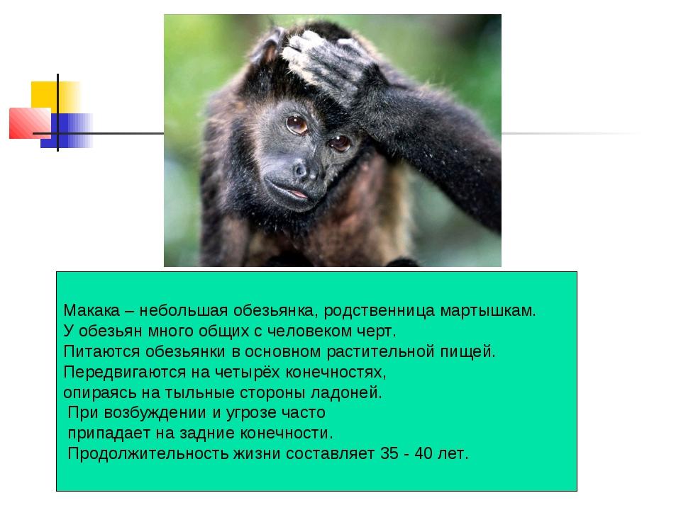 Макака – небольшая обезьянка, родственница мартышкам. У обезьян много общих с...