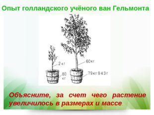 Опыт голландского учёного ван Гельмонта Объясните, за счет чего растение увел