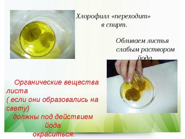 Хлорофилл «переходит» в спирт. Обливаем листья слабым раствором йода. Органич...