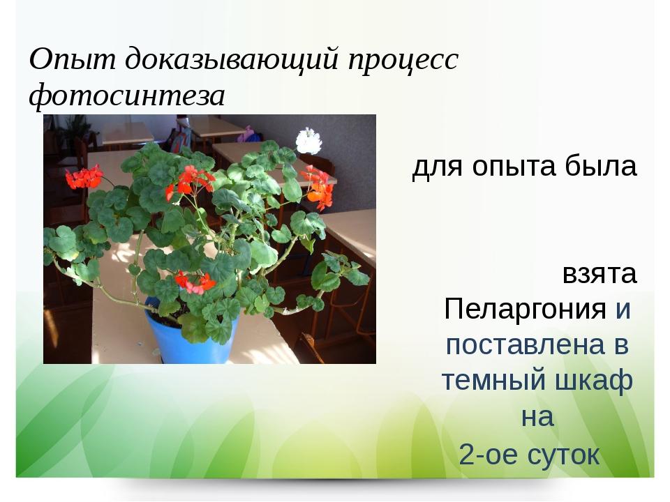 Опыт доказывающий процесс фотосинтеза для опыта была взята Пеларгония и поста...