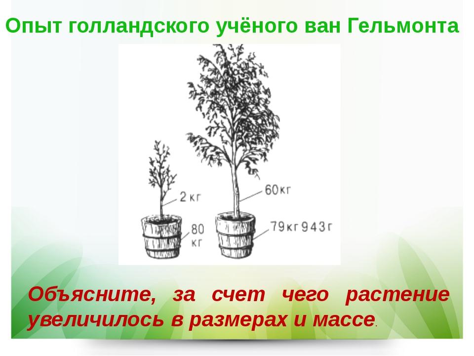 Опыт голландского учёного ван Гельмонта Объясните, за счет чего растение увел...