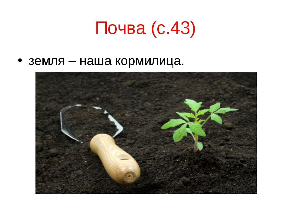 Почва (с.43) земля – наша кормилица.