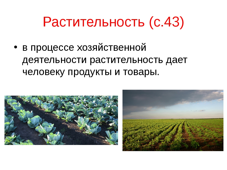 Растительность (с.43) в процессе хозяйственной деятельности растительность да...