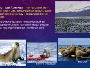 Животные Арктики — так называют этот особый живой мир, осмелившийся бросить
