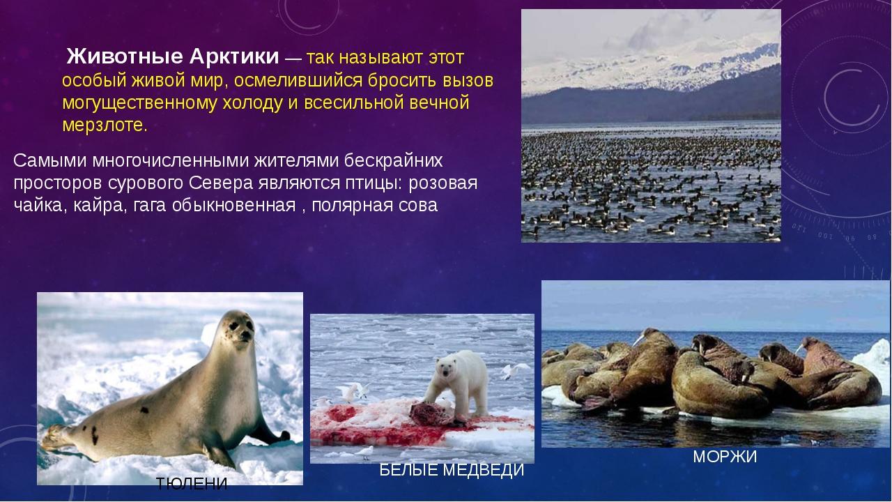 Животные Арктики — так называют этот особый живой мир, осмелившийся бросить...