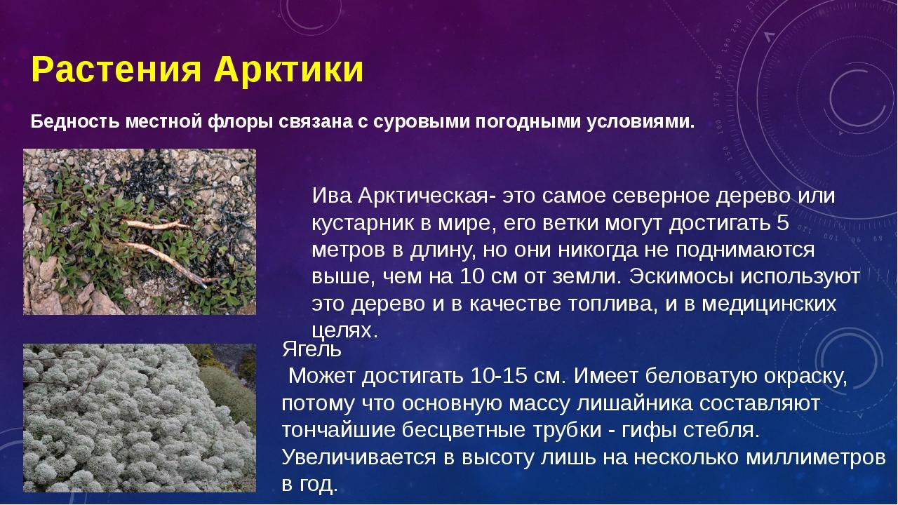 Растения Арктики Бедность местной флоры связана с суровыми погодными условиям...