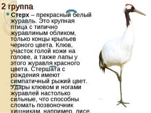 2 группа Стерх– прекрасный белый журавль. Это крупная птица с типично журавл