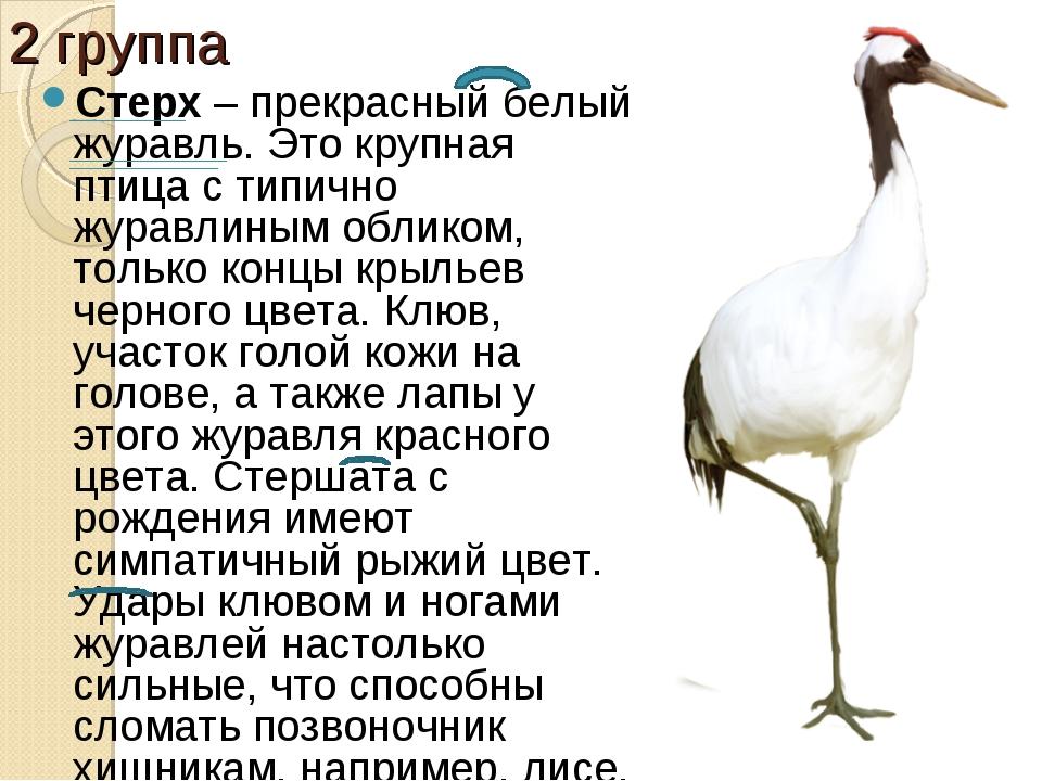 2 группа Стерх– прекрасный белый журавль. Это крупная птица с типично журавл...