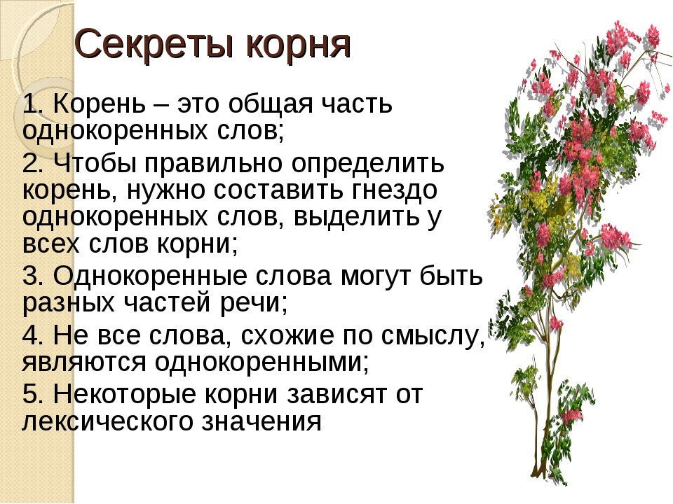 Секреты корня 1. Корень – это общая часть однокоренных слов; 2. Чтобы правиль...