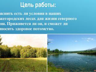 Выяснить есть ли условия в наших Нижегородских лесах для жизни северного олен