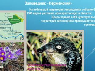 Заповедник «Керженский» На небольшой территории заповедника собрано более 600