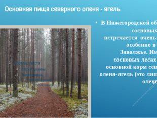 Основная пища северного оленя - ягель В Нижегородской области сосновых лесов