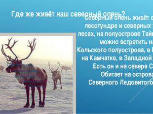 Где же живёт наш северный олень? Северный олень живёт в тундре, лесотундре и