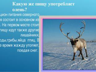 Какую же пищу употребляет олень? Рацион питания северного оленя состоит в осн